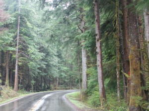 All the woods look beautiful. This is the road to the Sol Duc campground in Olympic National Park