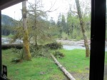 The view from our dinette. Hoh Rain Forest campground, site #19. Olympic National Park, Washington