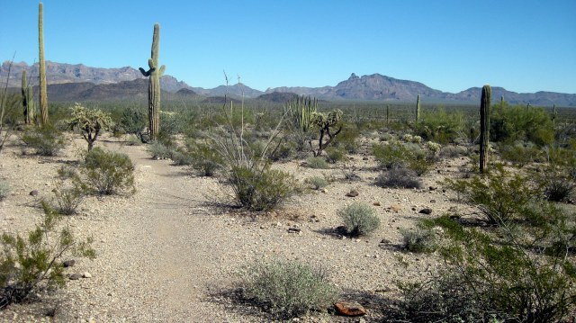 One of many hiking trails. Organ Pipe National Monument.