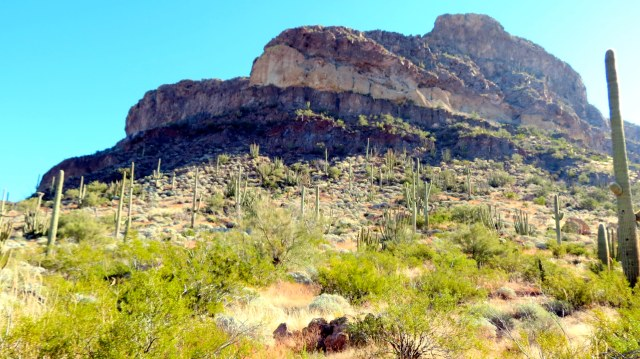 Beautiful Organ Pipe National Monument.